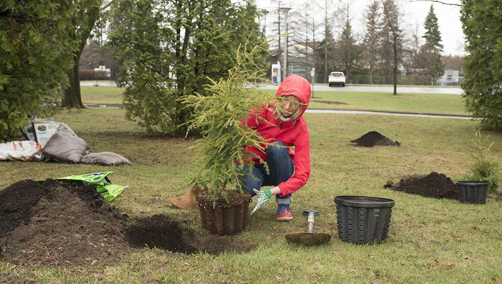Femme qui plante un arbre